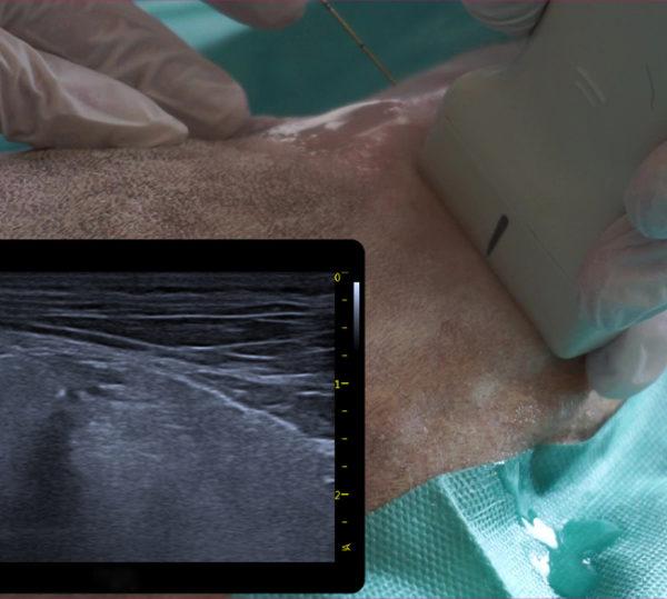 Ultraschall VET